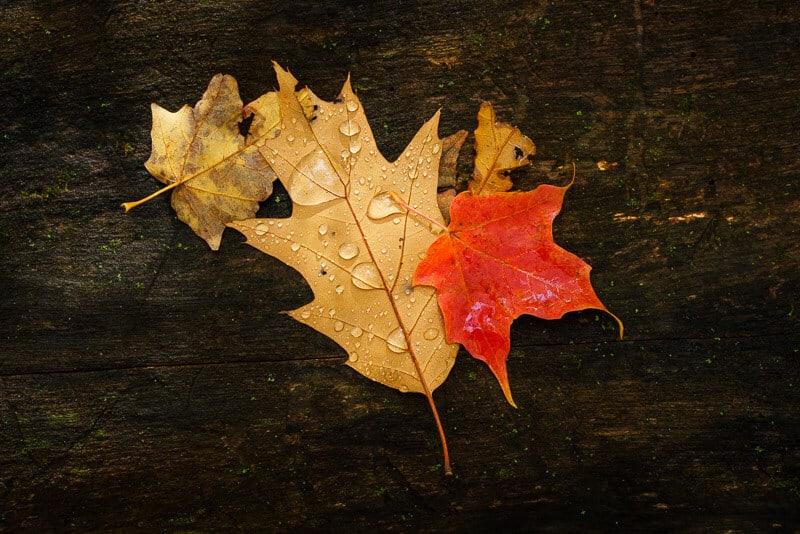 Three all leaves